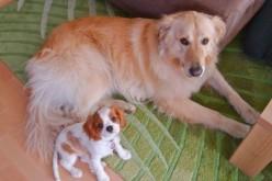 Baïka et Boby