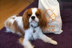 La Doggy Box de juin