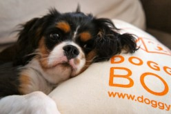 Le coussin DoggyBox