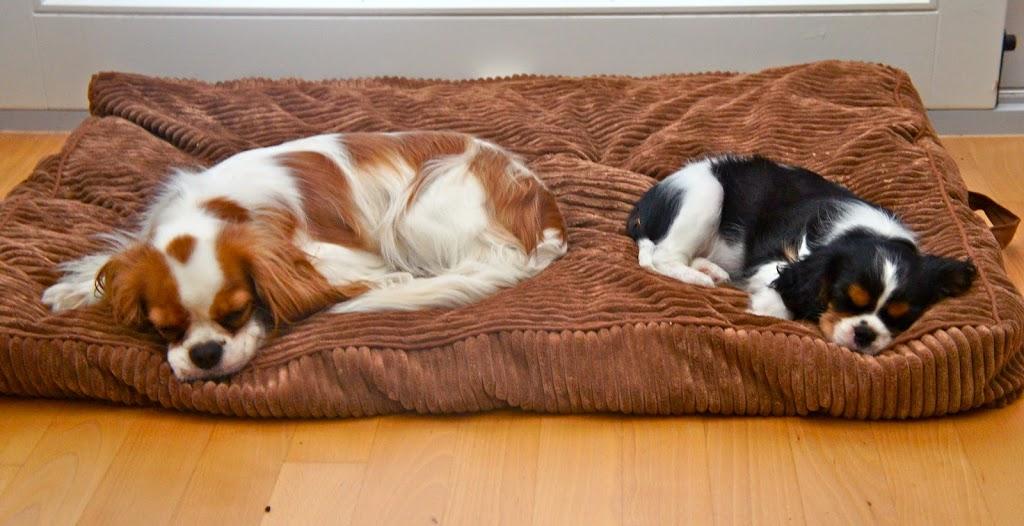 bien choisir le panier du chien baikasblog. Black Bedroom Furniture Sets. Home Design Ideas