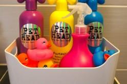 Bien choisir le shampoing du chien