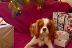 Offrir un chien en cadeau