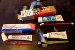 Bien choisir la brosse à dent du chien