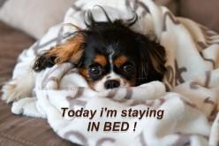 Aujourd'hui je reste au lit