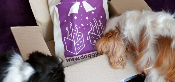 La Doggybox Anniversaire
