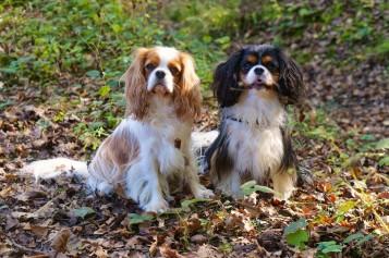 7 conseils d'automne aux propriétaires de chiens