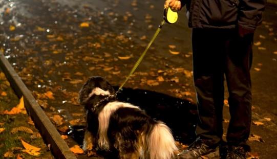 Sécurité du soir pour mieux promener son chien dans le noir