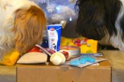 WauWauBox, la nouvelle box canine suisse