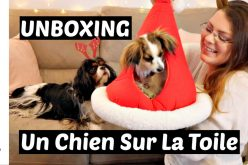 UNBOXING – Colis de la boutique un Chien Sur La Toile | Déballage d'articles et jouets pour chien