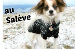 Les pattes dans la neige et la tête dans les nuages – Promenade avec les chiens sur le Salève