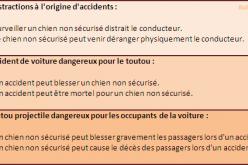 Chien et sécurité en voiture