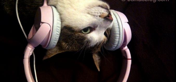 La musique dans les oreilles