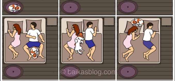 Comment un chien peut gagner votre lit