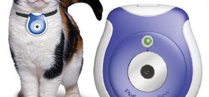 Les doggie cameras