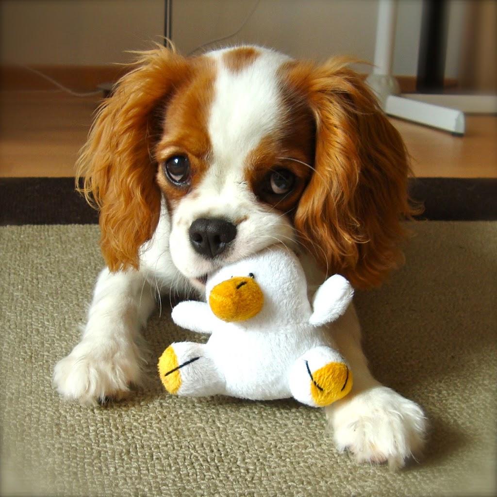 10 astuces pour la propret du chiot baikasblog - Image bebe chien ...