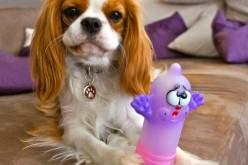 Promis, c'est le jouet du chien