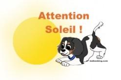 Prévenir les accidents thermiques chez le chien
