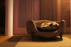 Le confort du fauteuil pour chien
