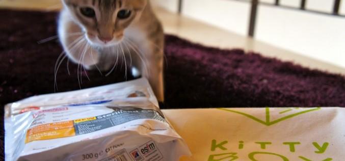 Une Kitty Box pour Brousquette