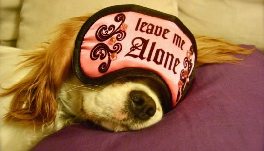 7 astuces pour apprendre la solitude au chien