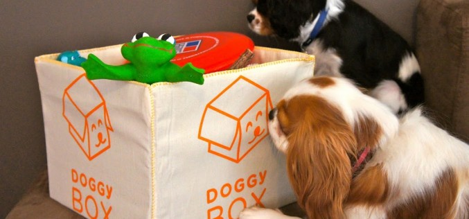 The DoggyBox à jouets
