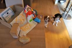 La Doggy Box de septembre