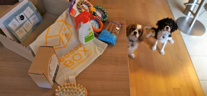 La Doggy Box de septembre