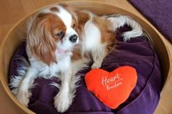 7 choses à savoir sur mon chien – Baïka