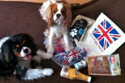 La DoggyBox So British