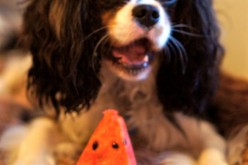 Des fruits pour mon chien