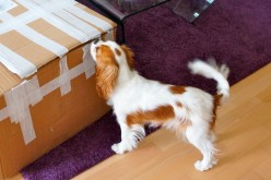 Mes 10 plus grandes erreurs d'achats canins