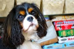 L'armoire de rangement des affaires pour chiens