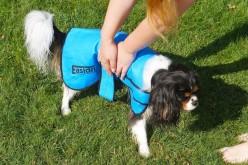 Manteau rafraichissant pour chien Easidri chez Atoodog