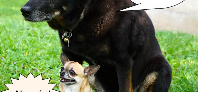Chihuahua ¡ No mas !