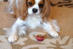 Déballage : Coli Made In Pet cupcakes pour chien
