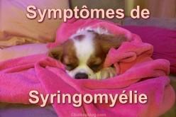 Symptômes et dépistage de la syringomyélie chez mon Cavalier King Charles