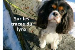 [Vidéo] Promenades dans la neige avec Milo
