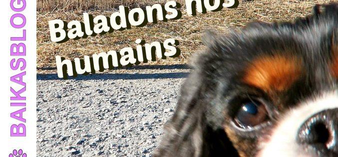 Promenade dans les montagnes Suisses – Les chiens baladent leurs humains