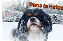 Les chiens jouent dans la neige – Winter Wonderland