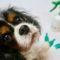 Les anti-parasitaires, des insecticides dangereux pour votre chien ou votre chat ?
